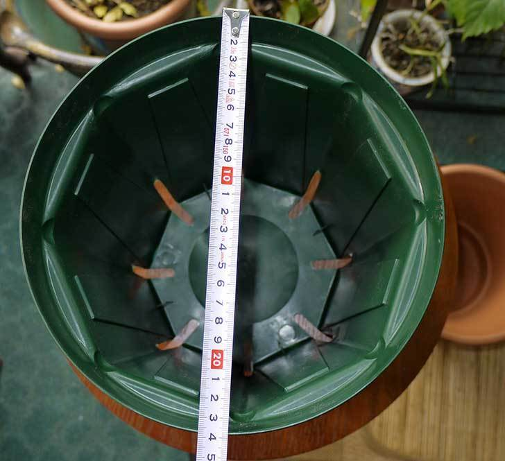 兼弥スリット鉢-ロングサイズ各種を楽天で大量買いした11.jpg