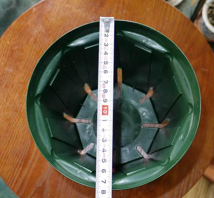 兼弥スリット鉢-ロングサイズ各種を楽天で大量買いした21.jpg