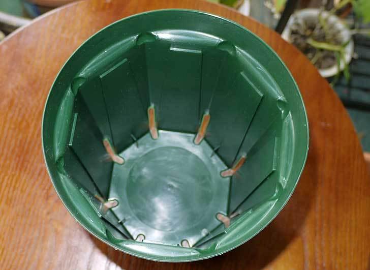 兼弥スリット鉢-ロングサイズ各種を楽天で大量買いした24.jpg