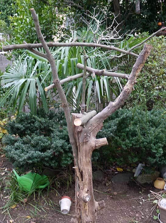 剪定した木で鳥の餌台を作ったが致命的な欠点に後から気づいた1.jpg
