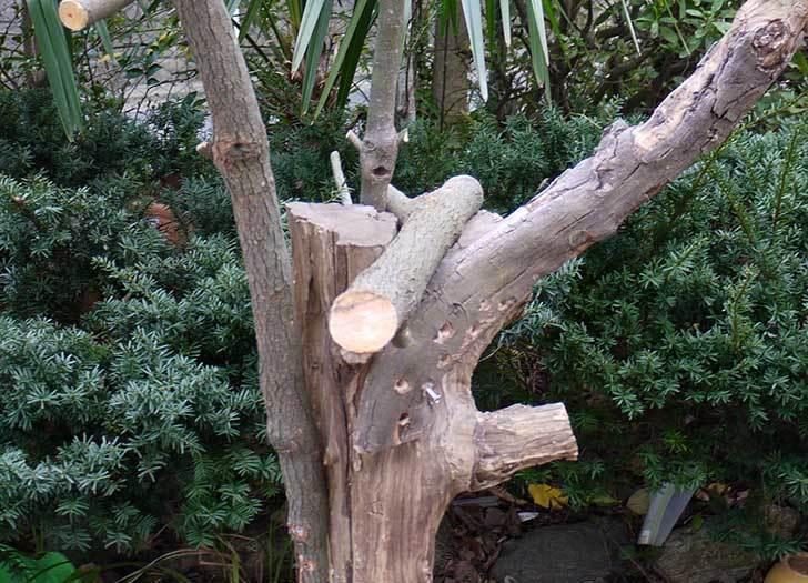剪定した木で鳥の餌台を作ったが致命的な欠点に後から気づいた3.jpg