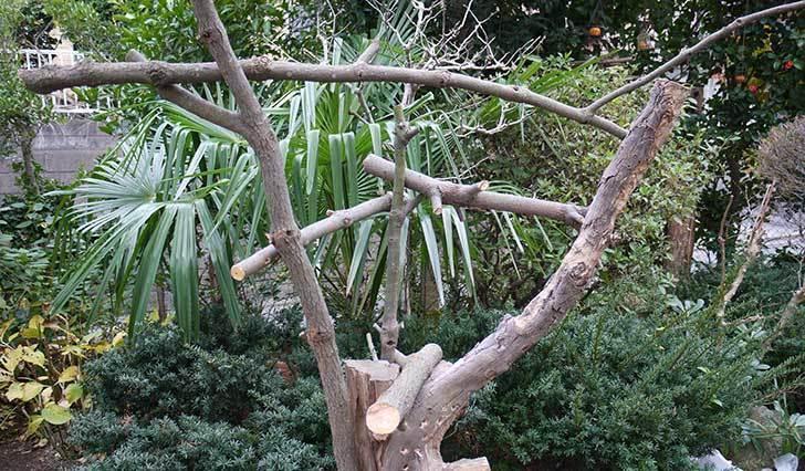 剪定した木で鳥の餌台を作ったが致命的な欠点に後から気づいた4.jpg
