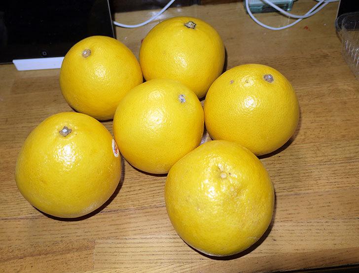 南アフリカ産のグレープフルーツを6個250円で買ってきた1.jpg