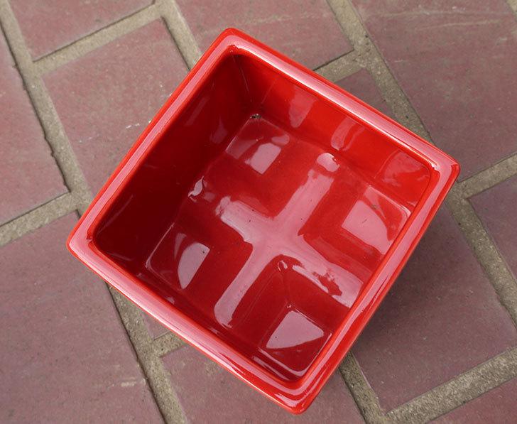 四角の鉢をケイヨーデイツーで買って来た4.jpg