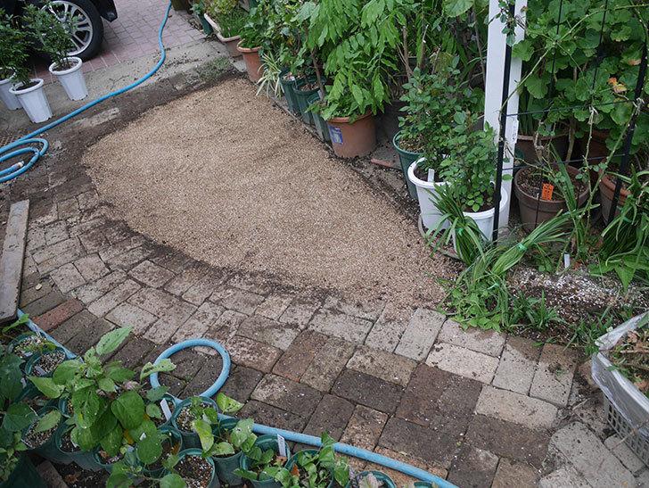 姫高麗芝生を植えた。2020年-16.jpg