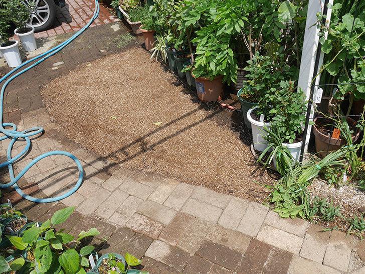 姫高麗芝生を植えた。2020年-4.jpg