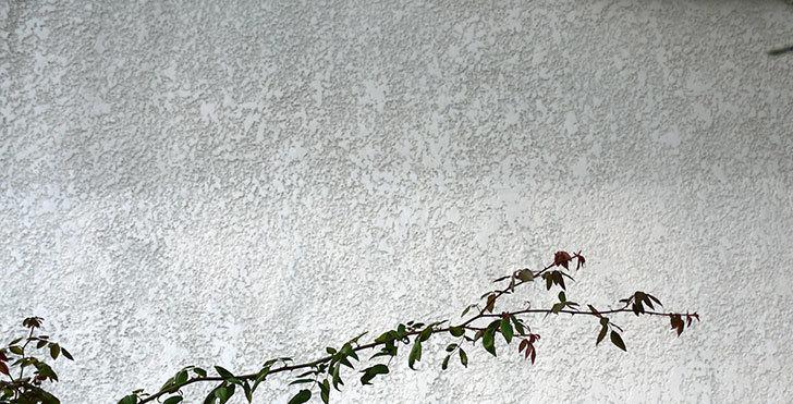 家の外壁塗装をした。2016年-7.jpg