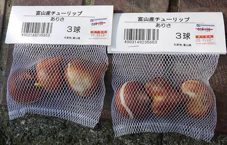 富山産チューリップ-ありさ-の球根をケイヨーデイツーで買って来た。2015年-1.jpg