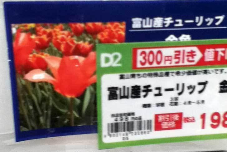 富山産チューリップ-金魚の球根をケイヨーデイツーで買って来た2.jpg