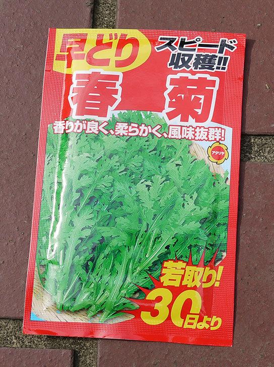 春菊の種をホームズで買ってきた1.jpg