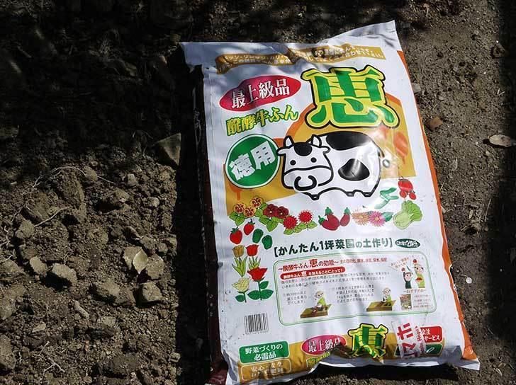 柿の木に寒肥として醗酵牛ふんを施した10.jpg