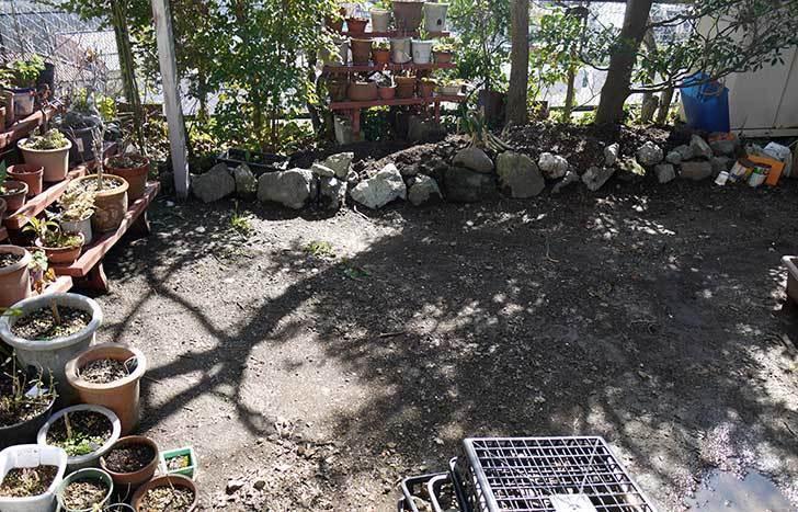柿の木に寒肥として醗酵牛ふんを施した19.jpg