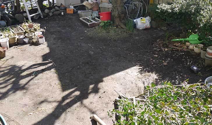 梅の木に寒肥をやるために溝を掘った2.jpg