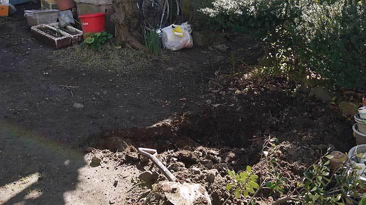 梅の木に寒肥をやるために溝を掘った3.jpg