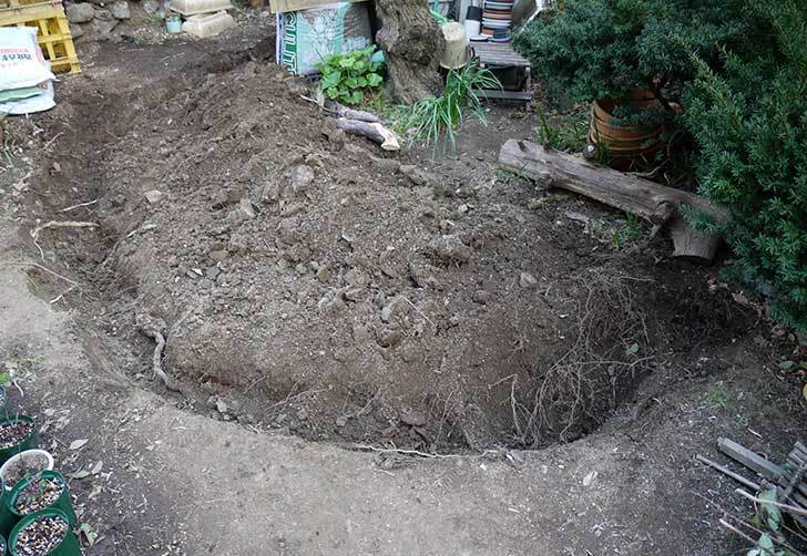 梅の木に寒肥をやるための穴掘りをした。2016年-12.jpg