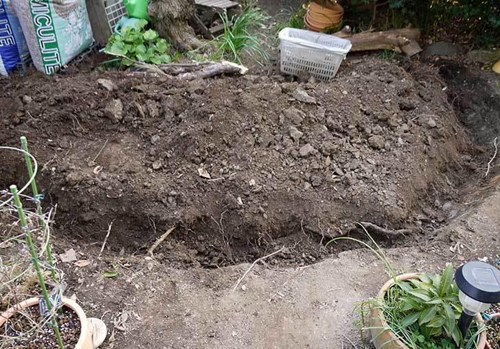 梅の木に寒肥をやるための穴掘りをした。2016年-8.jpg