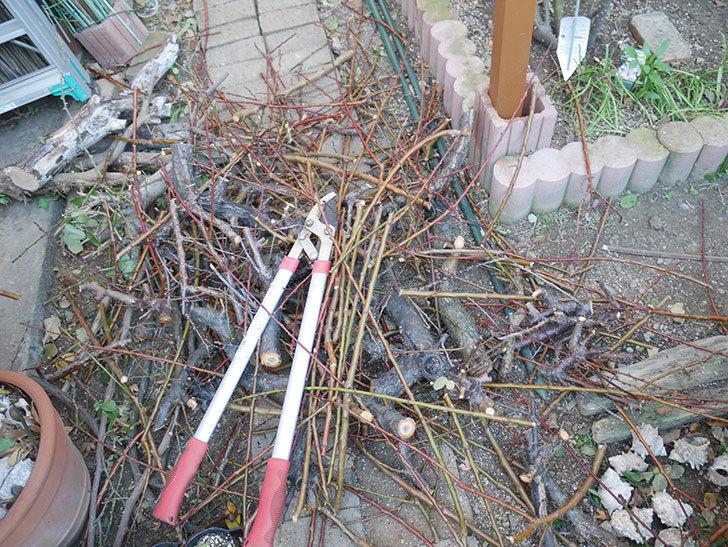 梅の木の剪定した。2019年-17.jpg