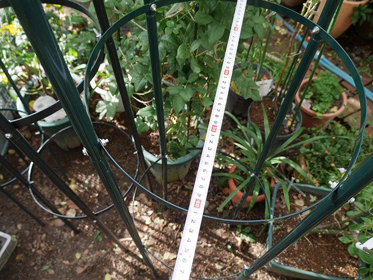 楽天で鉄製オベリスク高さ215cmを2個買った17.jpg