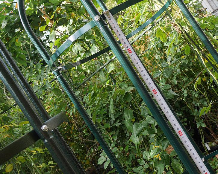 楽天で鉄製オベリスク高さ215cmを2個買った18.jpg
