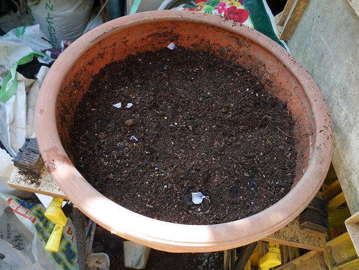 水色と濃い紫のビオラの苗を鉢に植えた。2018年-5.jpg