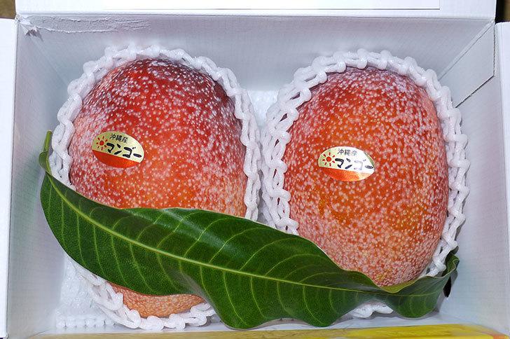 沖縄産のマンゴーを貰った1.jpg