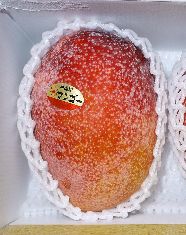 沖縄産のマンゴーを貰った2.jpg