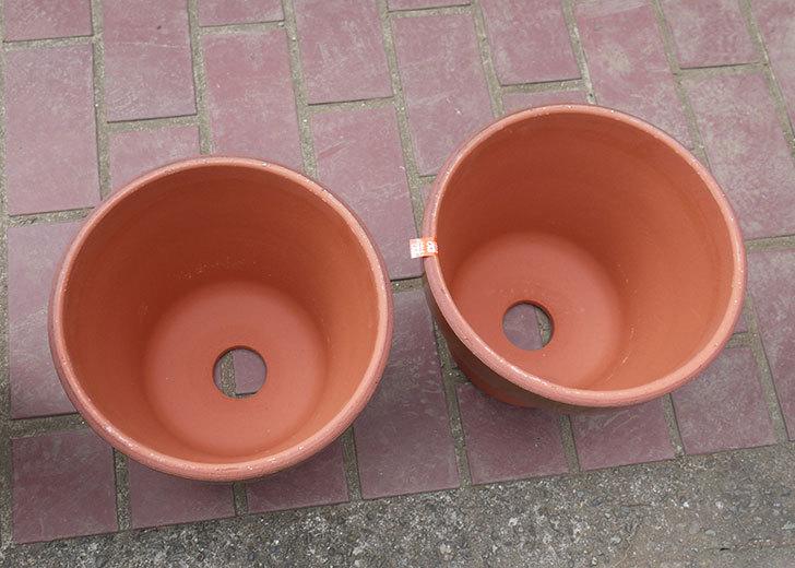 深鉢8号の植木鉢をケイヨーデイツーで買って来た3.jpg