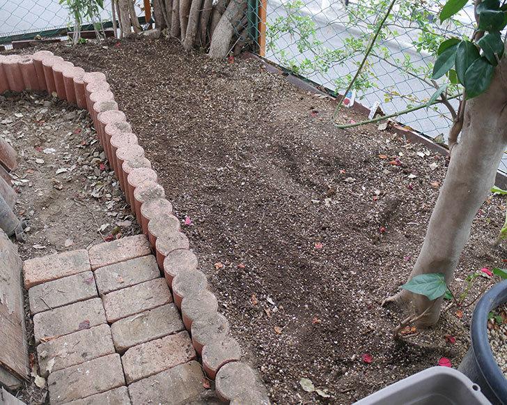 物をどかして空いたスペースに花壇を拡張した。2019年-1.jpg