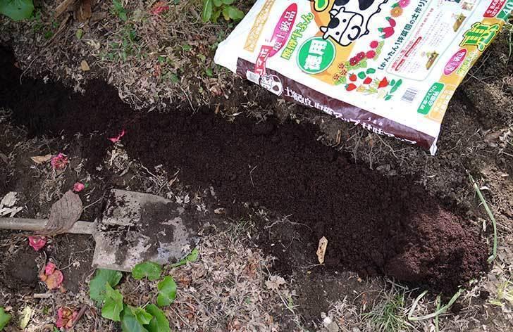 甘夏に寒肥として醗酵牛ふんを施した5.jpg
