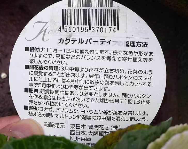 神戸ジェンヌ-ハボタン-カクテルパーティーをカインズで買ってきた3.jpg