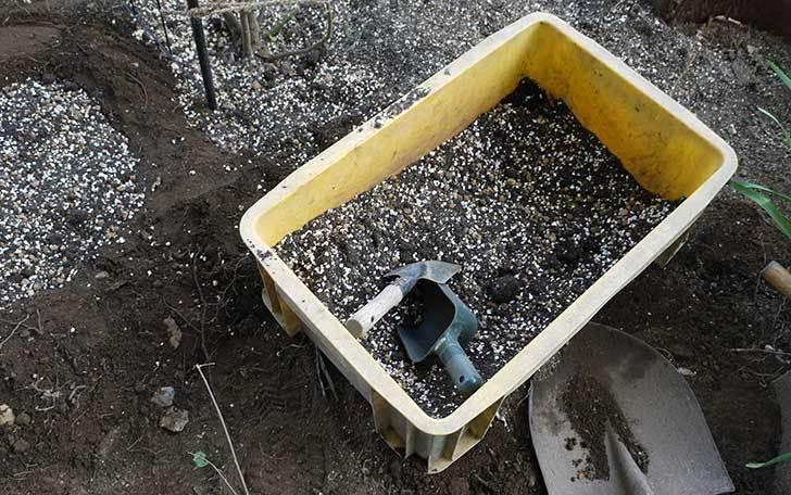 穴を掘ってプリンセスタカコ(バラ)を地植えした。2016年-6.jpg