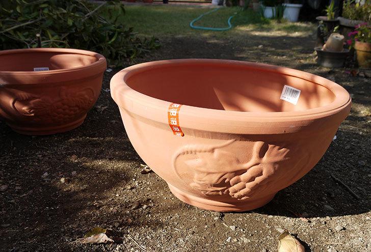 素焼き鉢-ぶどう柄の直径31cmと39cmの植木鉢をケイヨーデイツーで買って来た1.jpg