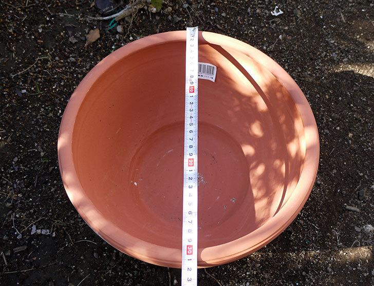 素焼き鉢-ぶどう柄の直径31cmと39cmの植木鉢をケイヨーデイツーで買って来た10.jpg