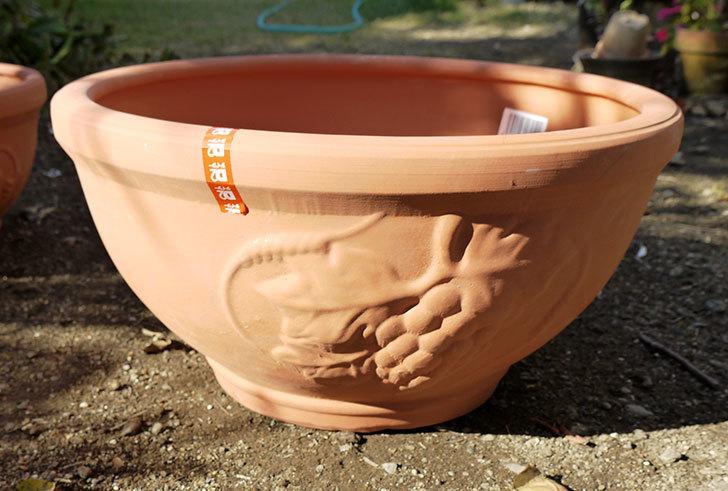 素焼き鉢-ぶどう柄の直径31cmと39cmの植木鉢をケイヨーデイツーで買って来た2.jpg