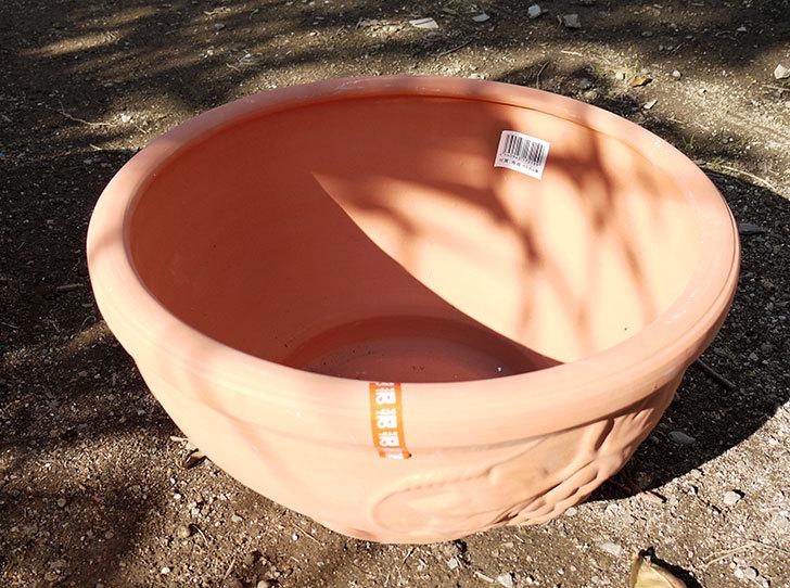 素焼き鉢-ぶどう柄の直径31cmと39cmの植木鉢をケイヨーデイツーで買って来た3.jpg