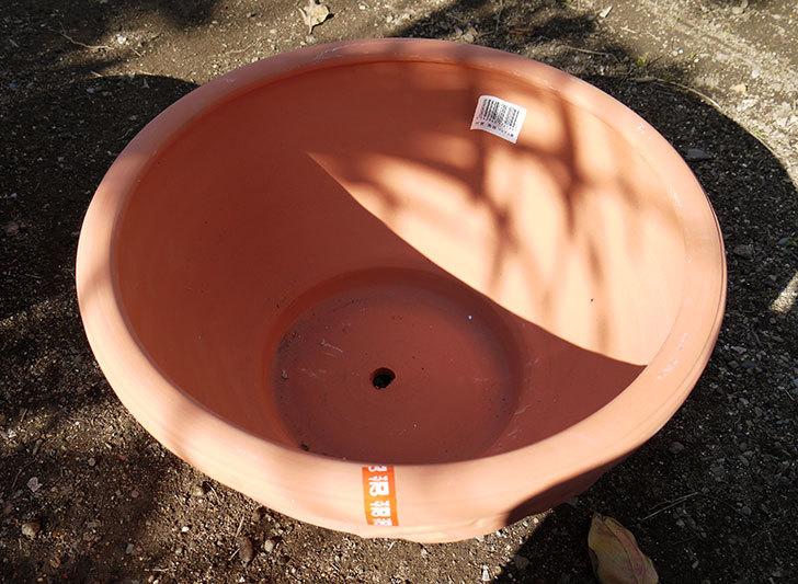 素焼き鉢-ぶどう柄の直径31cmと39cmの植木鉢をケイヨーデイツーで買って来た4.jpg