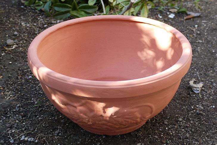 素焼き鉢-ぶどう柄の直径31cmと39cmの植木鉢をケイヨーデイツーで買って来た9.jpg
