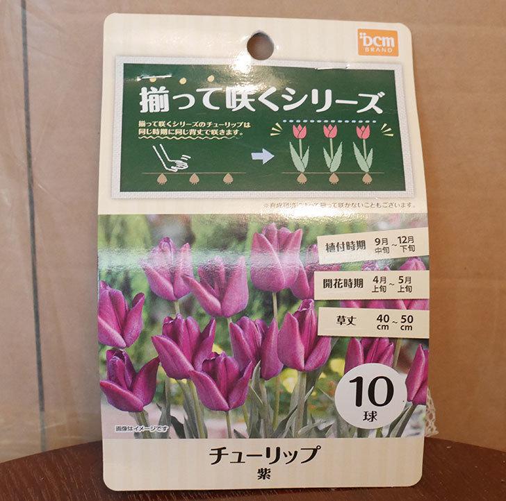 紫のチューリップの球根ケイヨーデイツーで216円だったので買って来た。2018年-1.jpg