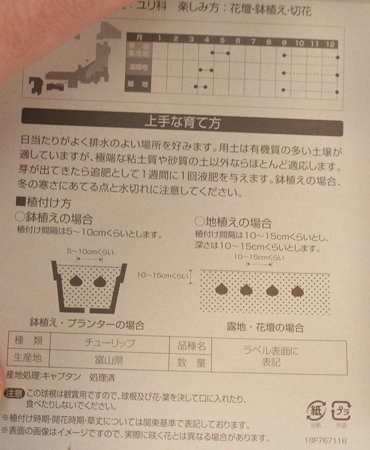 紫のチューリップの球根ケイヨーデイツーで216円だったので買って来た。2018年-3.jpg