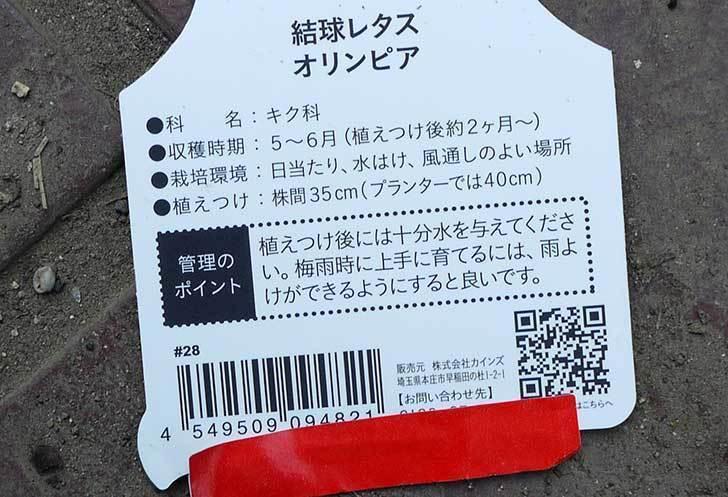 結球レタス-オリンピアの苗がカインズで半額だったので2個買って来た4.jpg