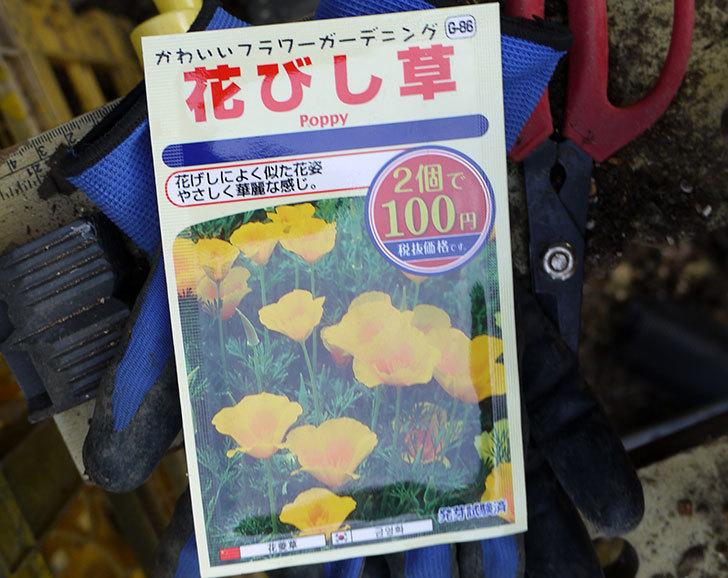 花びし草(カリフォルニア・ポピー)のタネ蒔いた。2016年-2.jpg