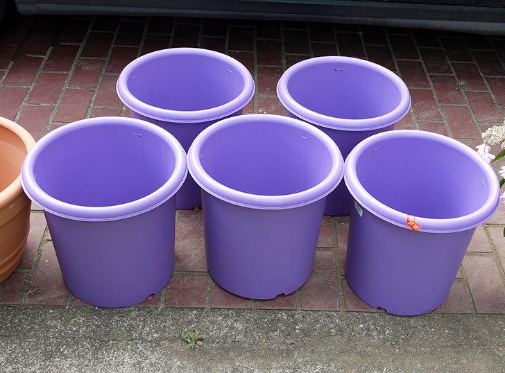 菜園ポッド-10号-紫をケイヨーデイツーで買って来た1.jpg