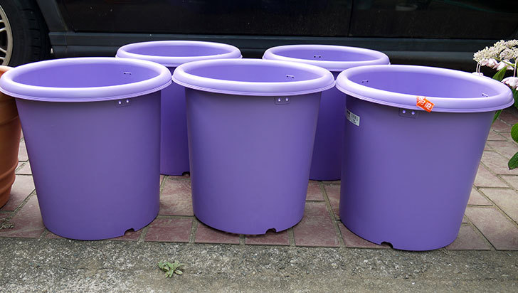 菜園ポッド-10号-紫をケイヨーデイツーで買って来た2.jpg