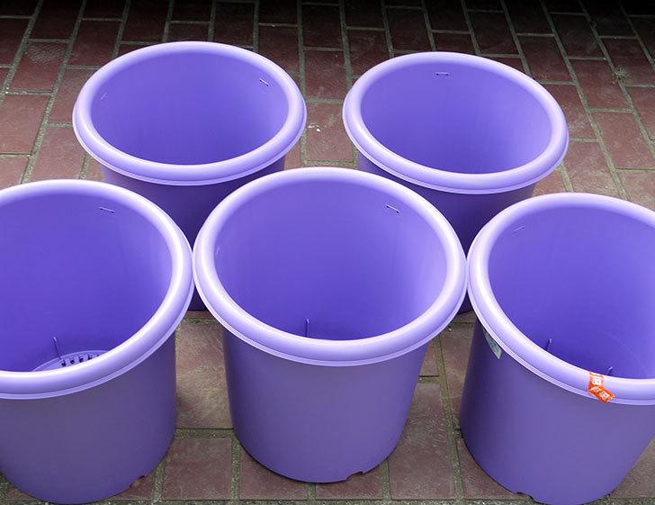 菜園ポッド-10号-紫をケイヨーデイツーで買って来た3.jpg