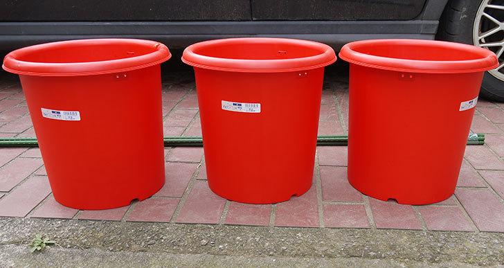 菜園ポッド-10号-赤を3個ケイヨーデイツーで買って来た1.jpg