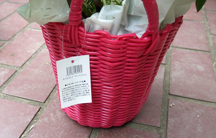 観葉植物のセット鉢がホームズで500円だったので買って来た5.jpg