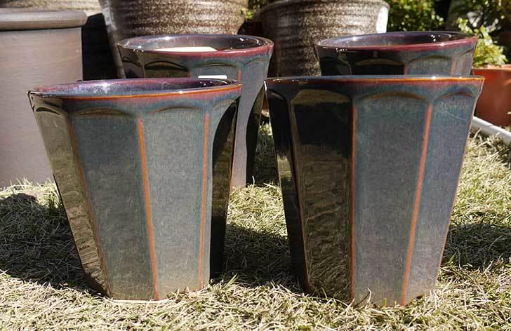 観葉鉢-こげ茶5号を2個、ケイヨーデイツーで買って来た1.jpg