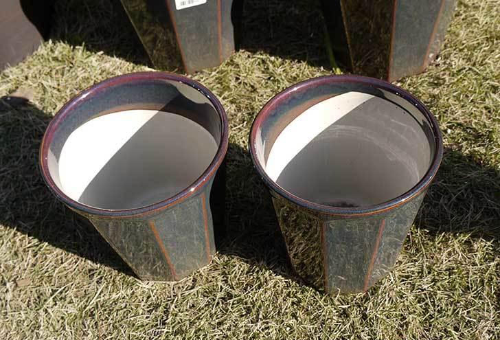 観葉鉢-こげ茶5号を2個、ケイヨーデイツーで買って来た2.jpg