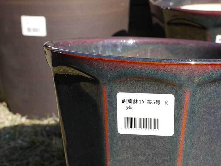 観葉鉢-こげ茶5号を2個、ケイヨーデイツーで買って来た5.jpg