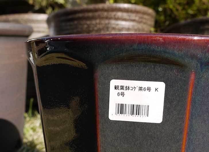 観葉鉢-こげ茶6号を2個、ケイヨーデイツーで買って来た6.jpg